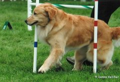 Next Agility Warwick GRCA National 2008 15.jpg
