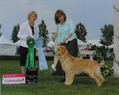 Knot Best Puppy Westwinds Sporting Dog Specialty Show.jpg